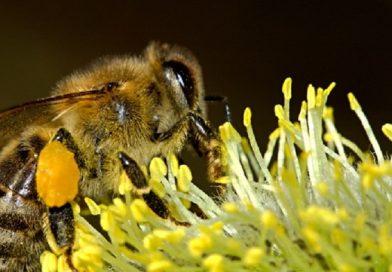 Natural Remedies For Summer Bug Bites