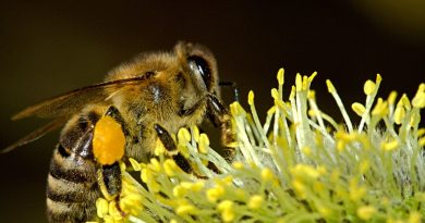 How Honey Bees Help Humans
