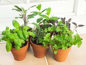 indoor her gardening