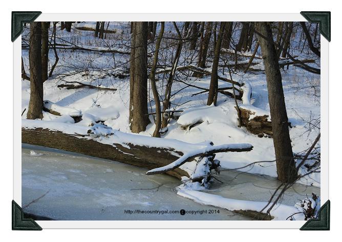 tree in river edgerton ohio